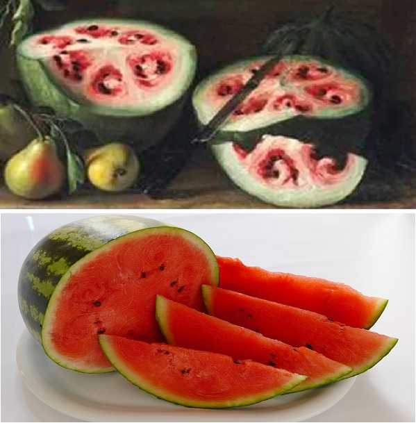 古代的水果和现代的水果
