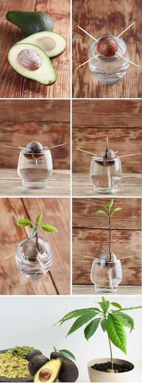 怎么种牛油果树