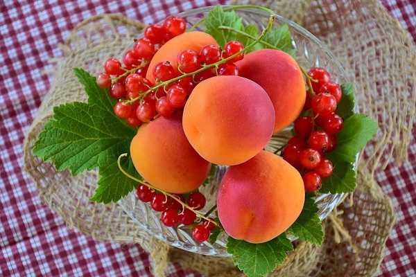 减肥吃什么水果