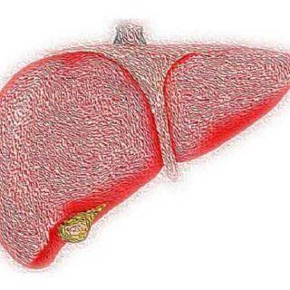 肝脏损伤和脂肪肝的原因及症状,如何正确护肝养肝