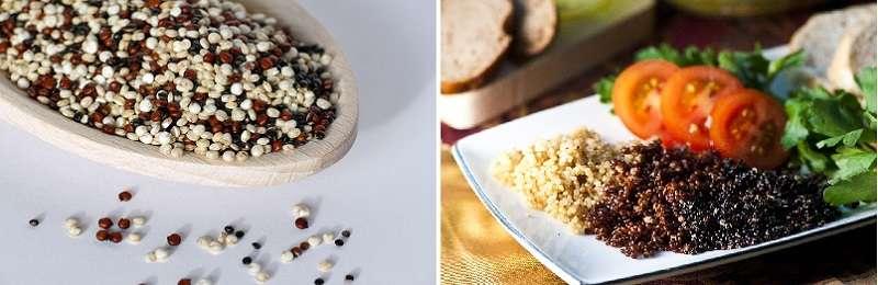 藜麦的种类
